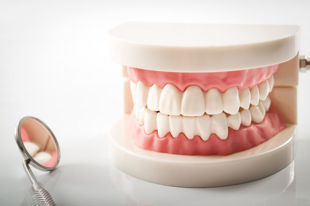 a teeth sample model and a magnifying glass